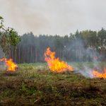 Brand einer Grünfläche