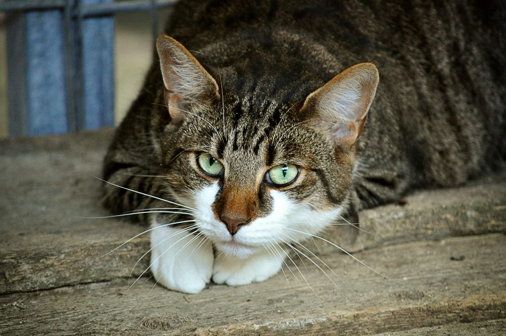 Symbolfoto Katze