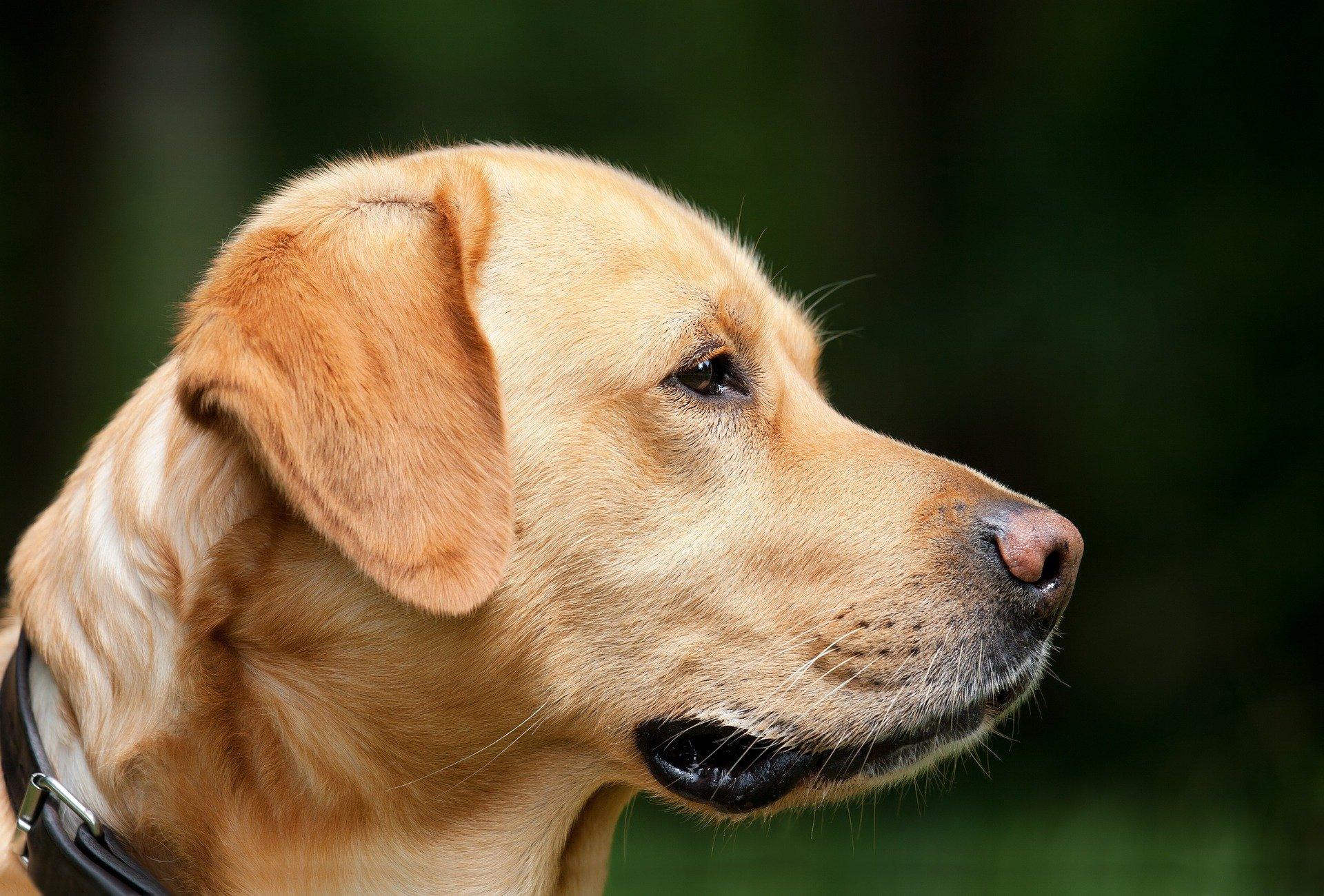 Symbolfoto Hund