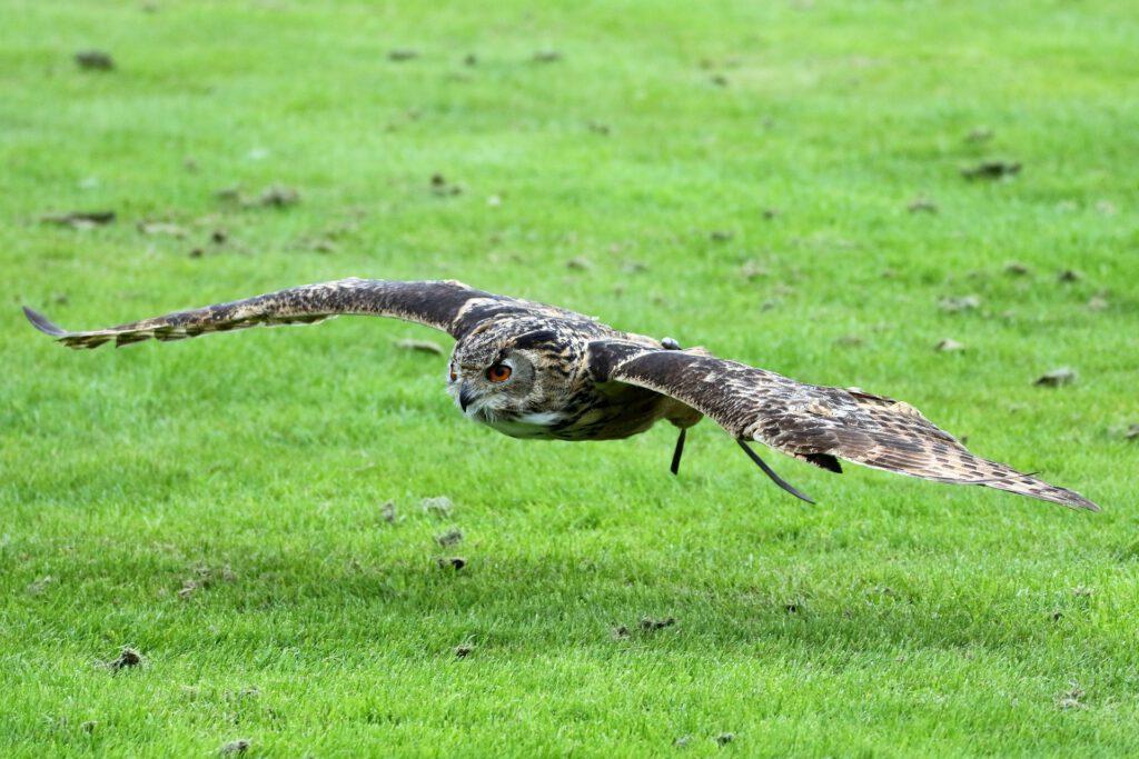 Symbolfoto Vogel
