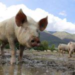 Elektronisches Antragsverfahren für Agrarförderung bis 15. Mai 2020 geöffnet