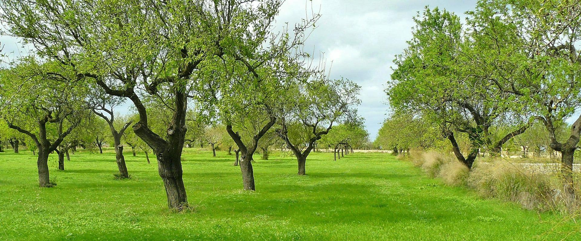 Symbolfoto Hecke Baum