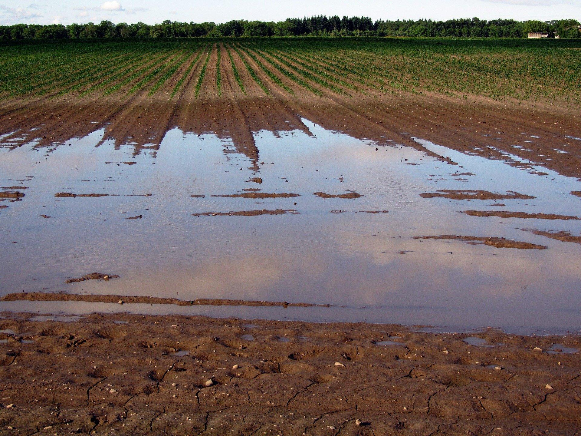 Symbolfoto Landwirtschaft Hochwasser